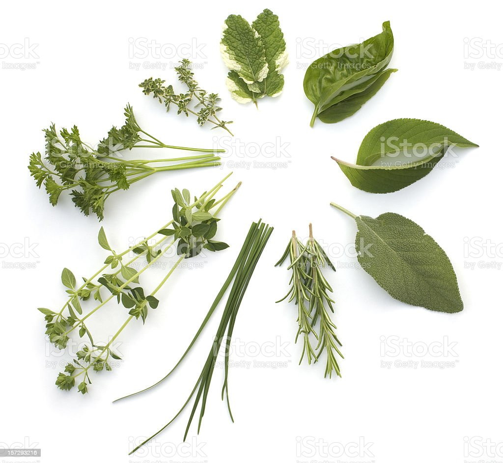 Circular arrangement of various herbs, isolated on white stock photo