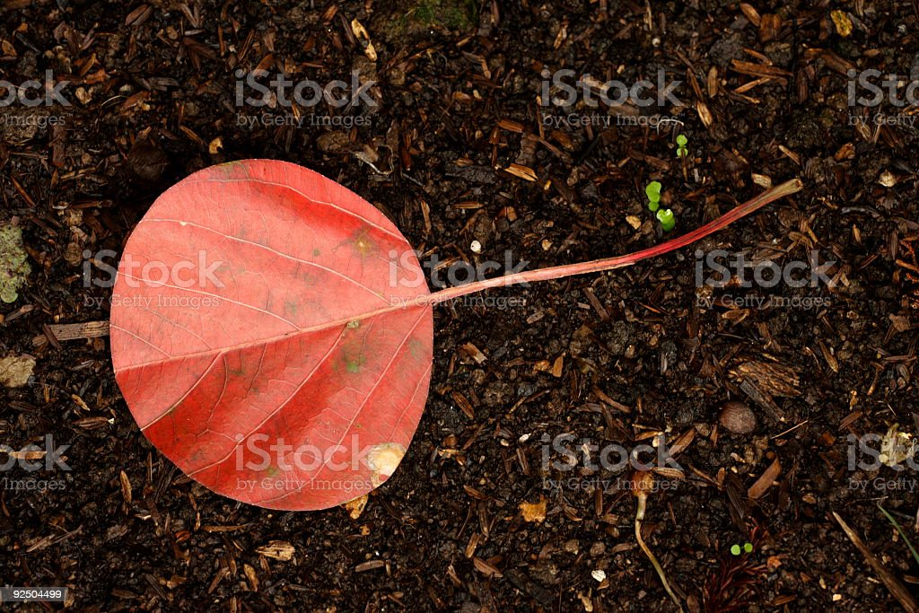 Circular Leaf royalty-free stock photo