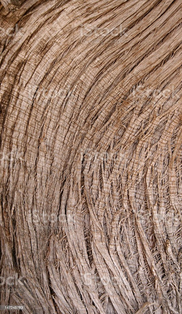 circular lineated bark stock photo