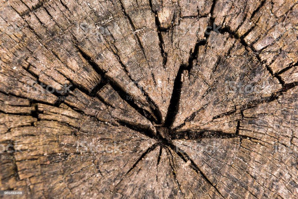 Circular sawed wood detailed background royalty-free stock photo
