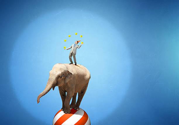 Circus animals performance . Mixed media stock photo