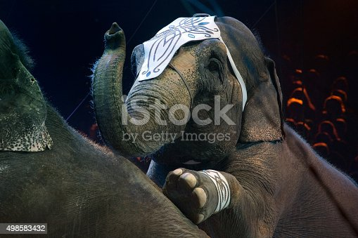 istock circus elephant close up detail 498583432