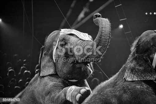istock circus elephant on black background 534894743