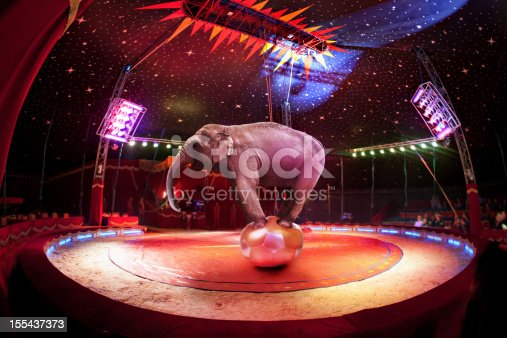 Circus elephant balancing on the ball in circus