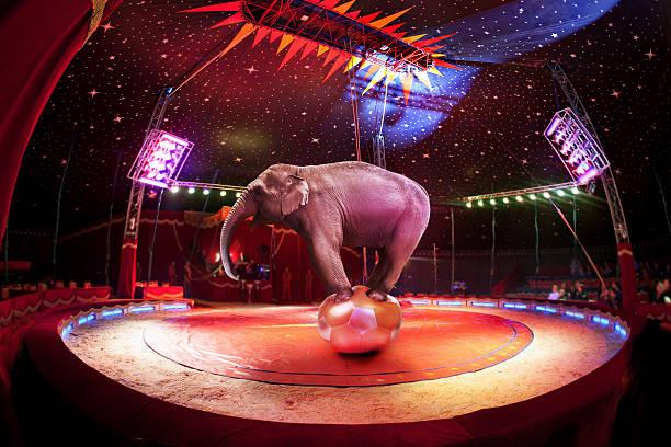 Éléphant de cirque - Photo