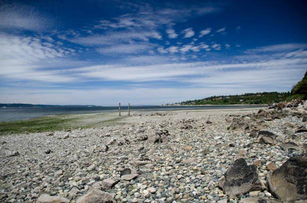 Cirrocumulus clouds over Puget Sound during low tide near Shoreline, Seattle stock photo