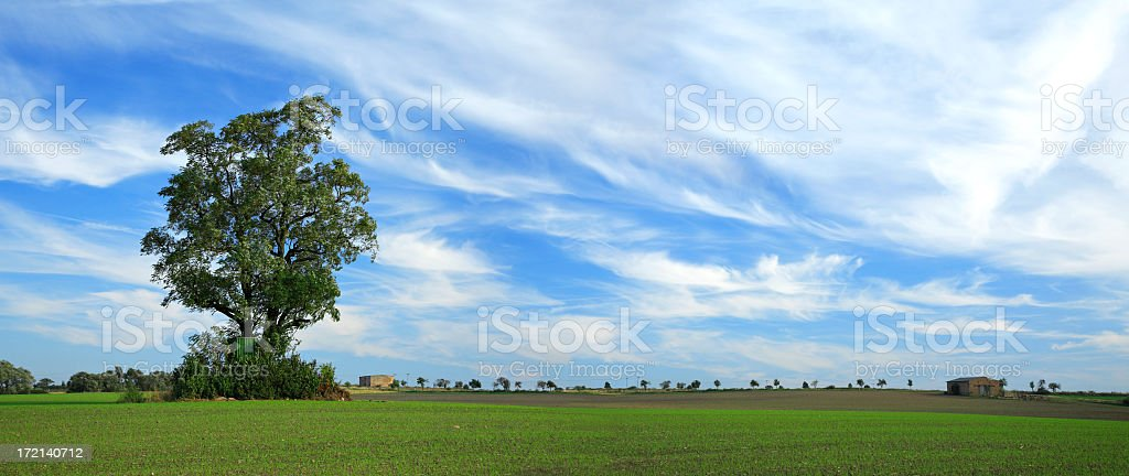 Cirrus Clouds over Field royalty-free stock photo