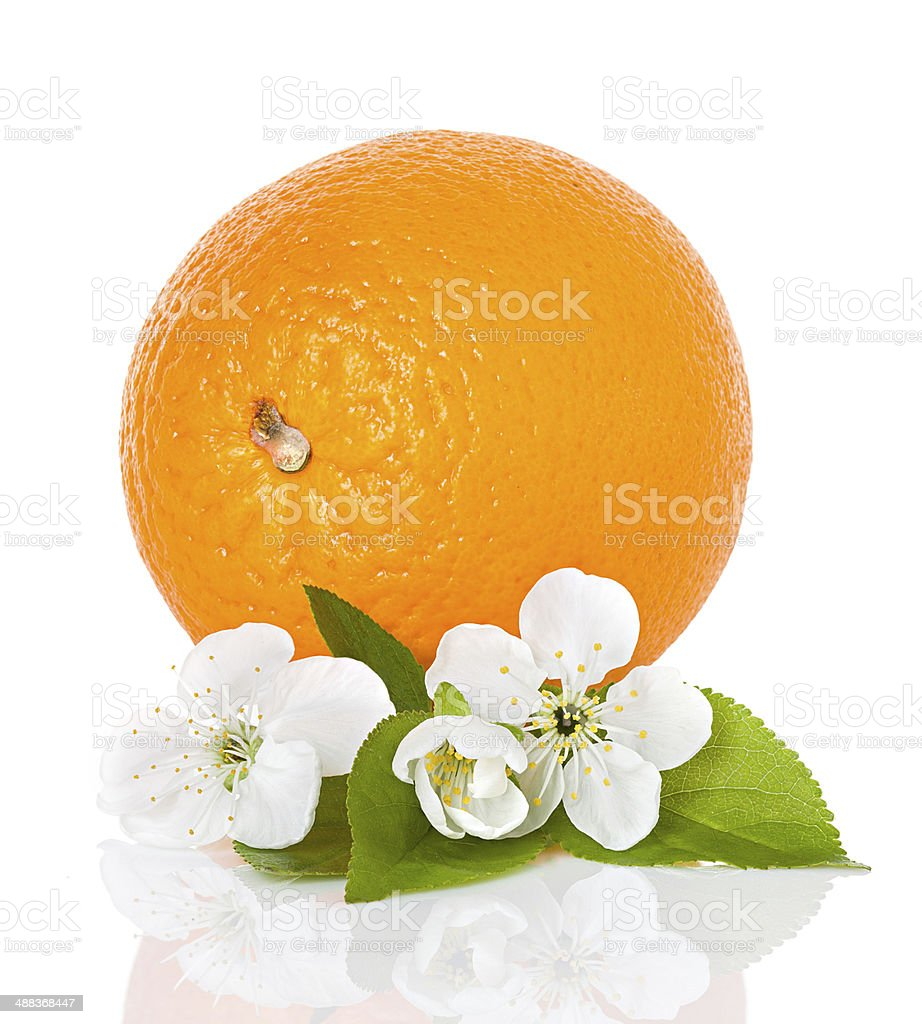 citrus fruit - orange with flowers and leaves isolated stock photo