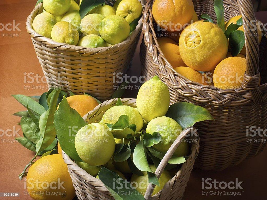 Citrus harvest royalty-free stock photo