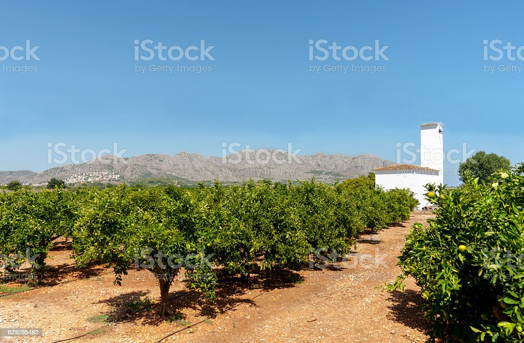 Citrus orchards In Valencia region Spain. stock photo