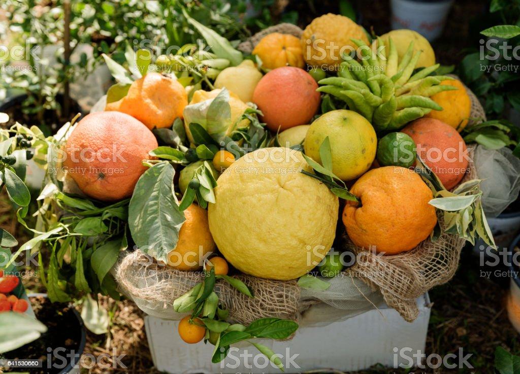 citruses – Foto