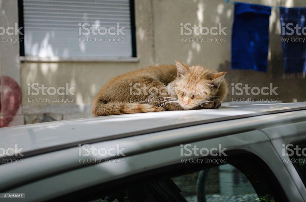 City cat stock photo