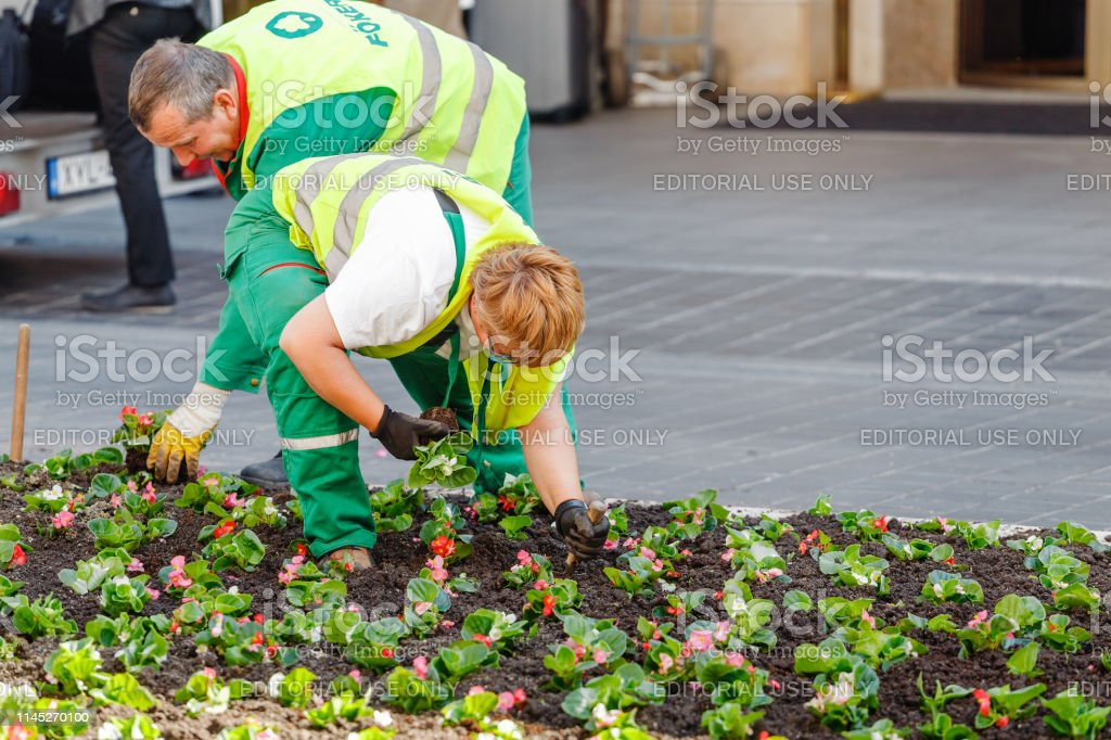 City Communal Service Workers Planting Flowers At Flowerbed Near