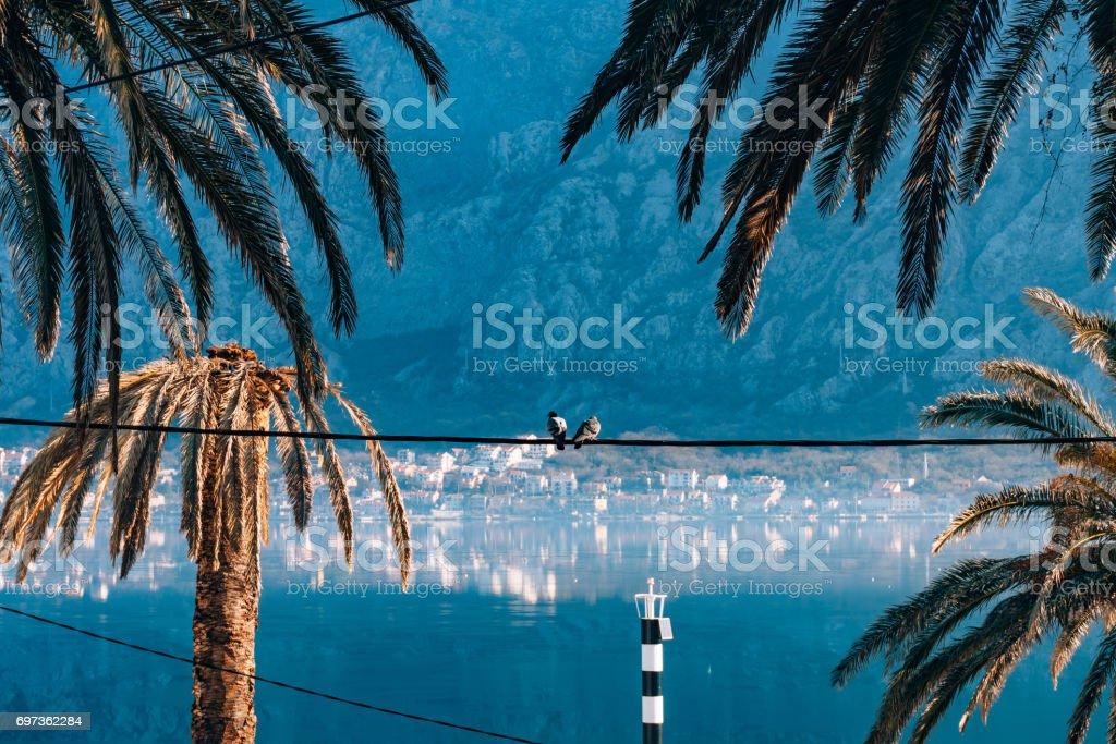City Dobrota in the Bay of Kotor stock photo