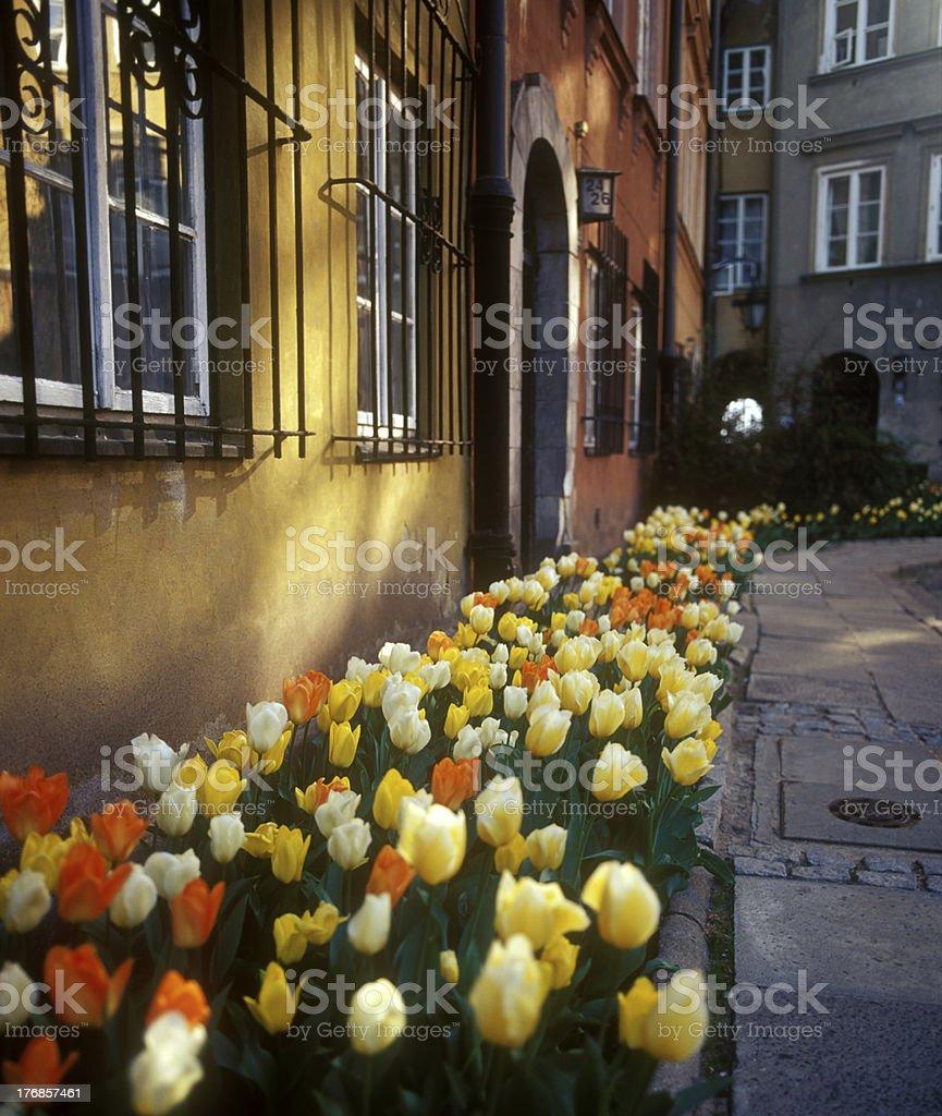 City flowers. royalty-free stock photo