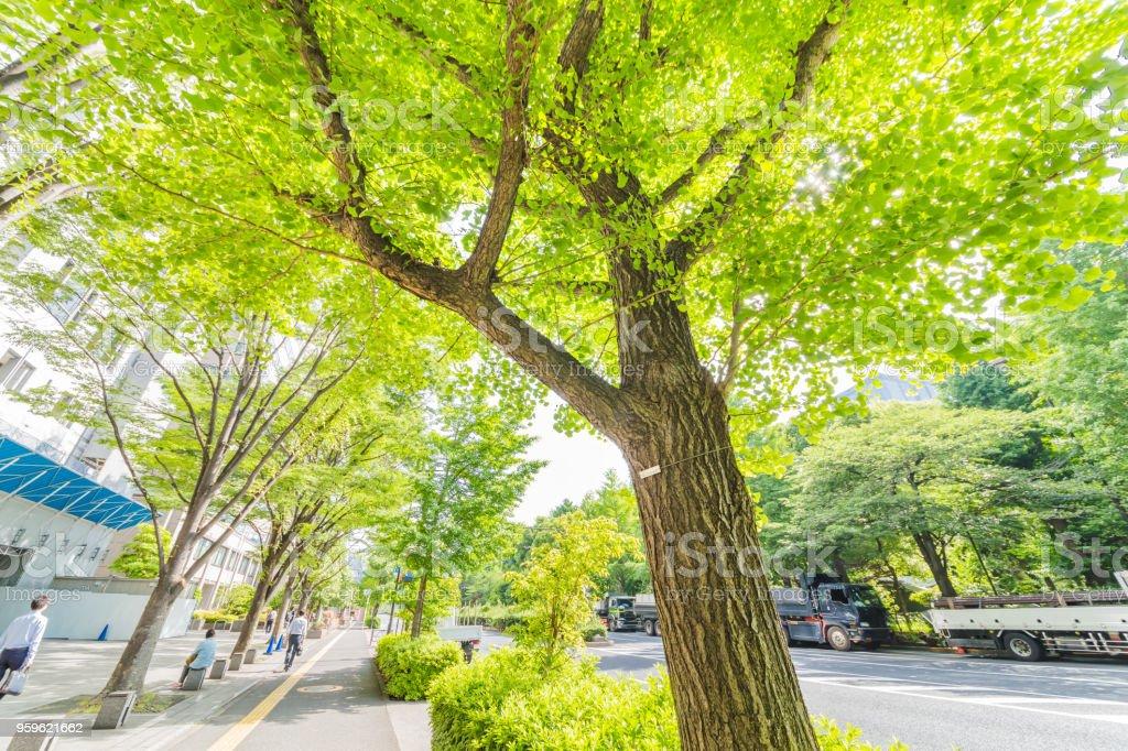 Ciudad verde fresco - Foto de stock de Alegre libre de derechos