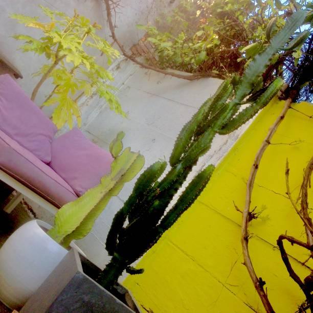 City garden in Spring stock photo