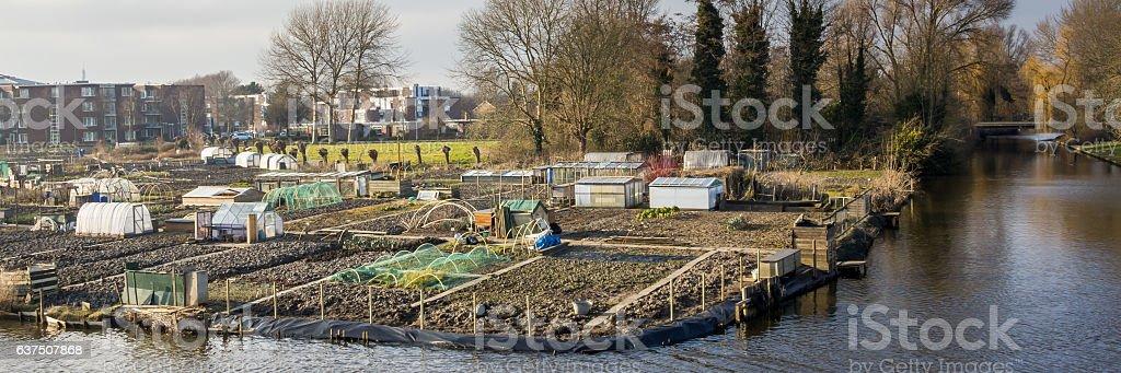 City gardening in Enkhuizen Netehrlands - Photo