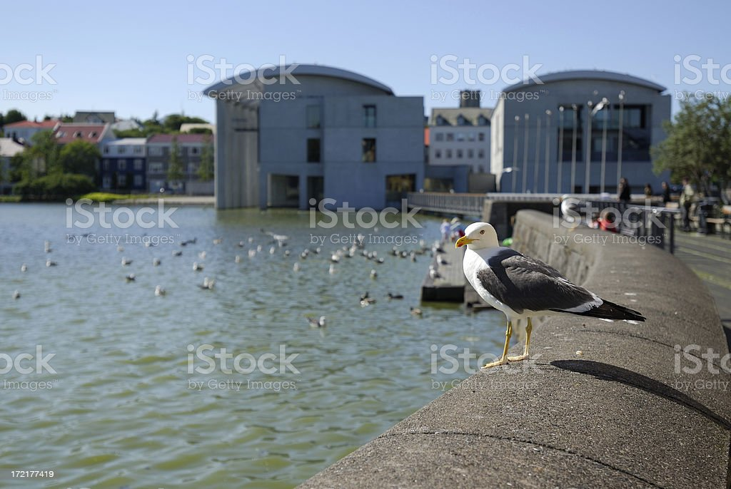 City hall of Reykjavik and gull stock photo