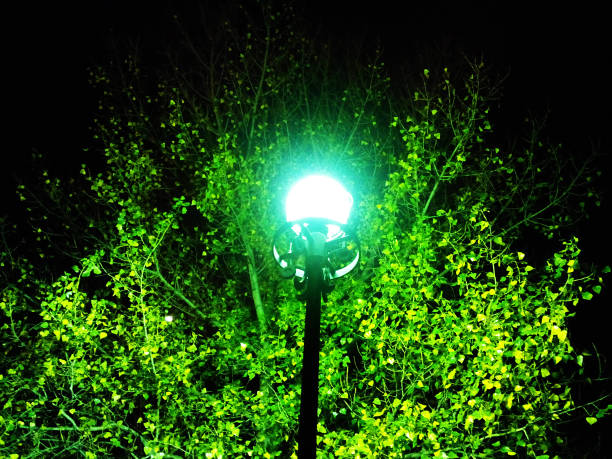 City lantern – Foto