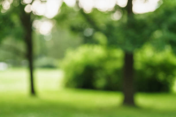 city park blurred background for your project stock photo