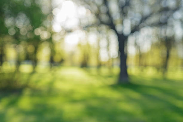 city park bokeh background 50mm lens defocused bokeh background of apple garden with blossoming trees  in sunny day, backdrop shallow stock pictures, royalty-free photos & images