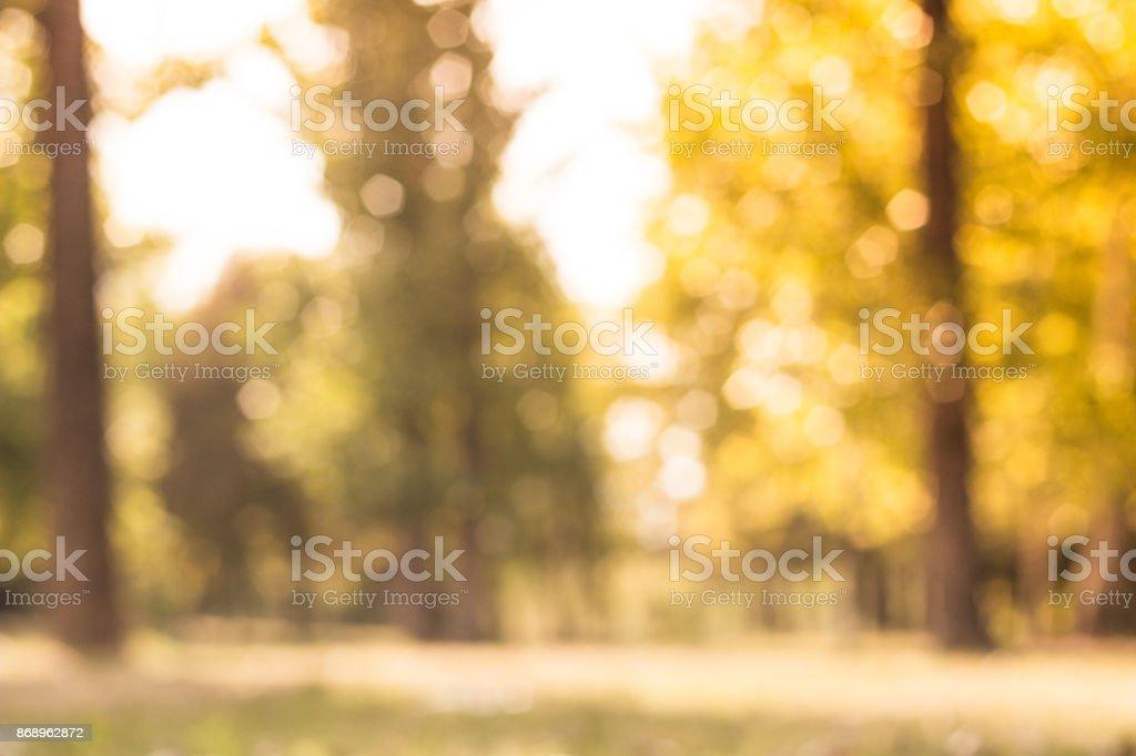 City park bokeh background stock photo