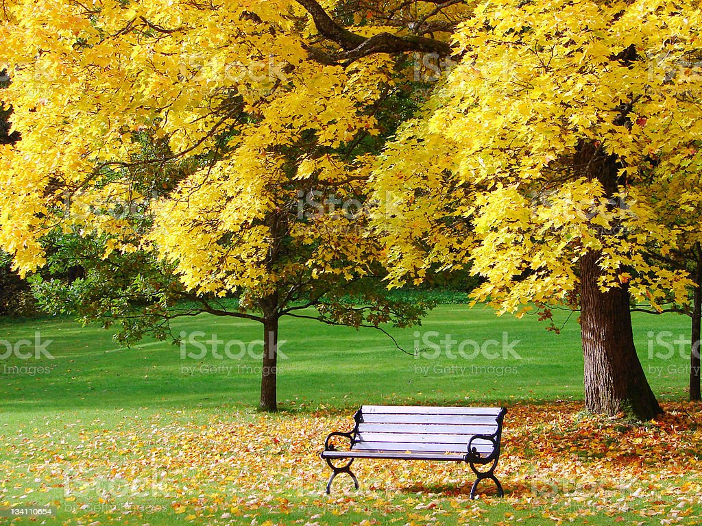 City park in autumn royalty-free stock photo