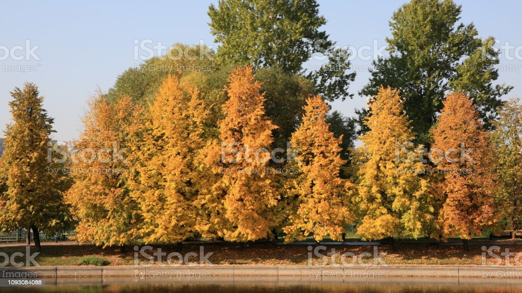 city park in gold fall stock photo