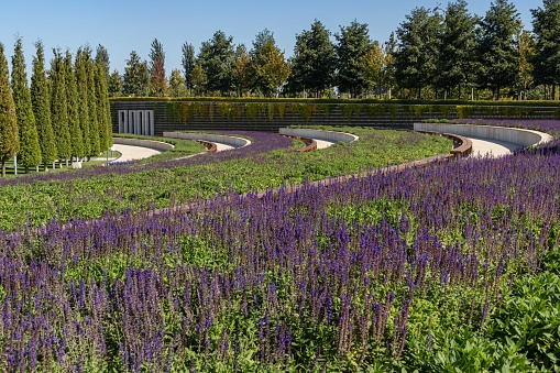 シティパーククラスノダールまたはガリツキーパーク緑の草装飾的な木々白いスタジアムのファサードを持つ風景レクリエーションやウォーキングのための公共の美しい都市公 - アロマテラピーのストックフォトや画像を多数ご用意