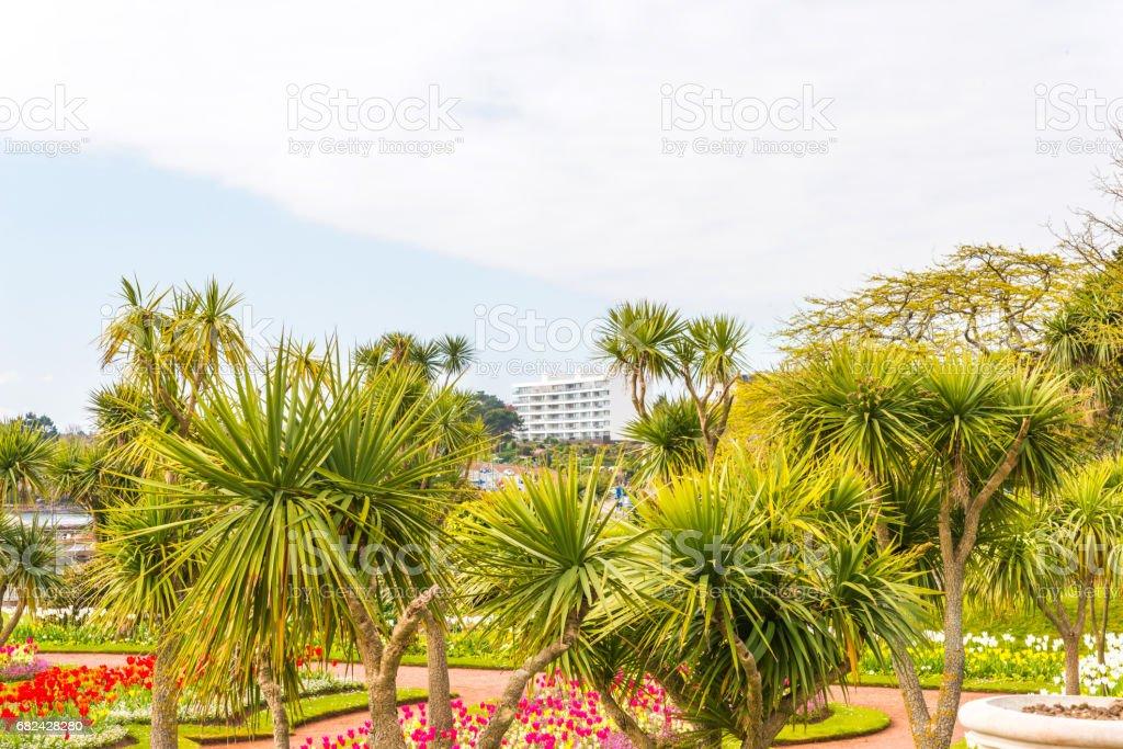 City Park mit exotischen Bäumen und viel Farbe Blumen, einem wunderschönen Rastplatz, Gasse zwischen Bäumen und Blumen Lizenzfreies stock-foto