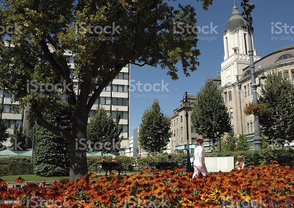 city park with flowers royaltyfri bildbanksbilder