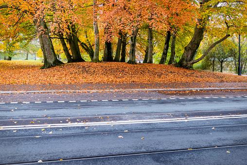 Gothenburg city street in autumn.