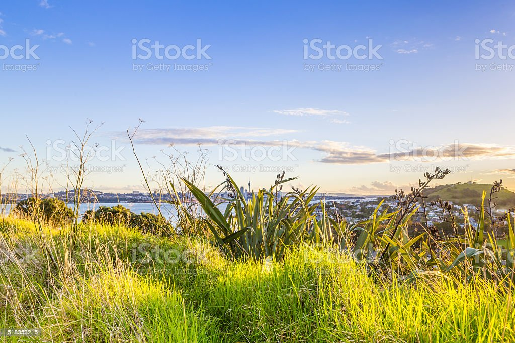 City sunset view through the grass stock photo