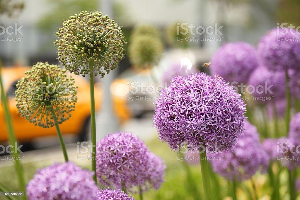 City Traffic Through Flowers stock photo