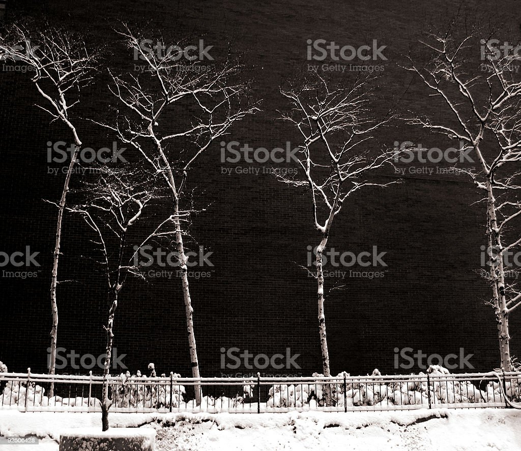 City Trees in Winter royalty-free stock photo