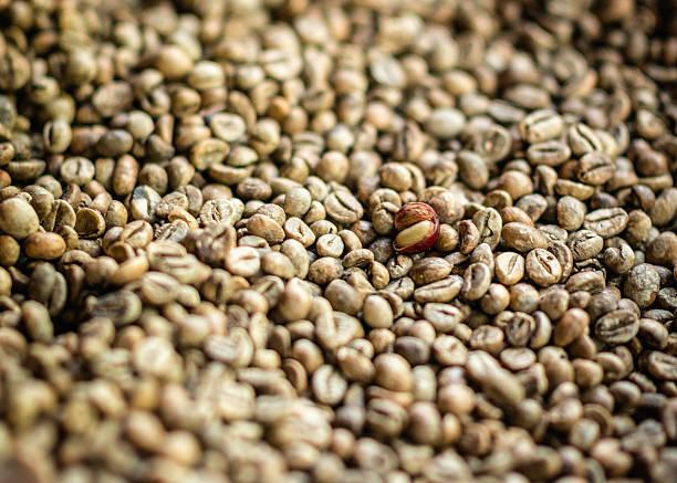 civeta granos de café primer plano - gato civeta fotografías e imágenes de stock