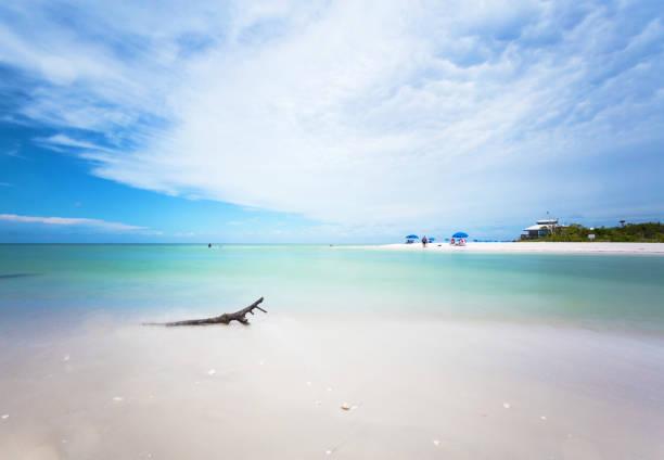 clam pass park in naples, southern florida usa - mięczak zdjęcia i obrazy z banku zdjęć
