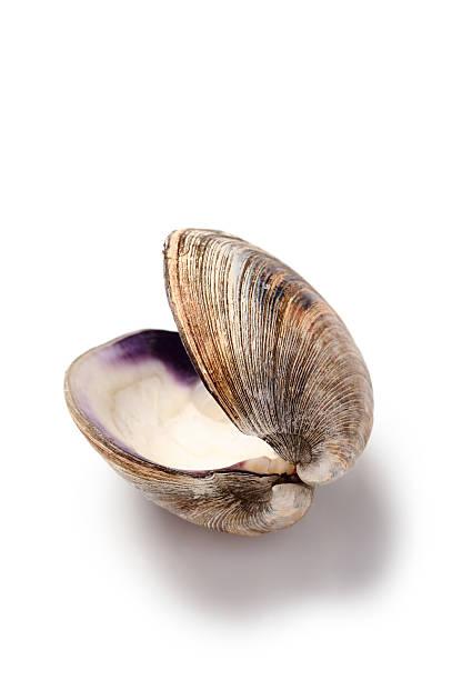 clam shell - mięczak zdjęcia i obrazy z banku zdjęć