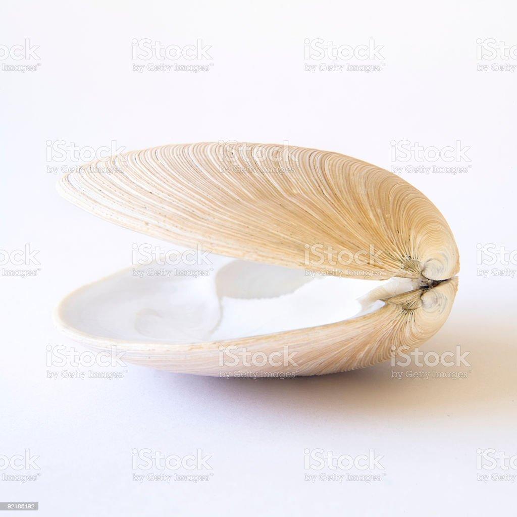 Muschel-shell Lizenzfreies stock-foto
