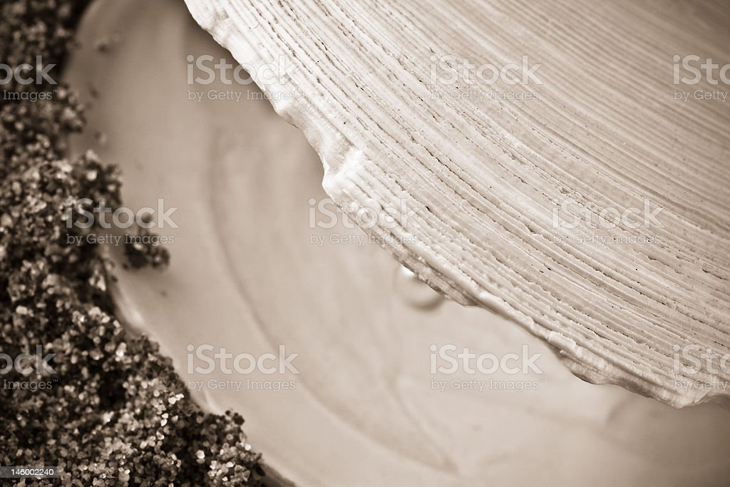 clam shell with pearl - sepia stock photo