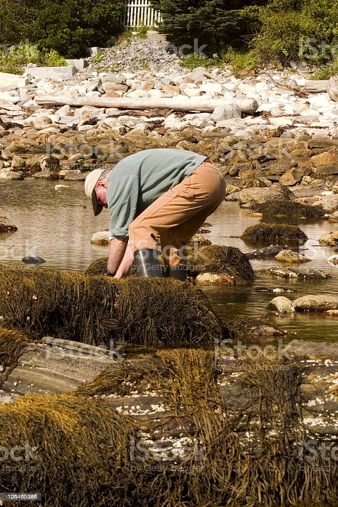 Clamming royalty-free stock photo