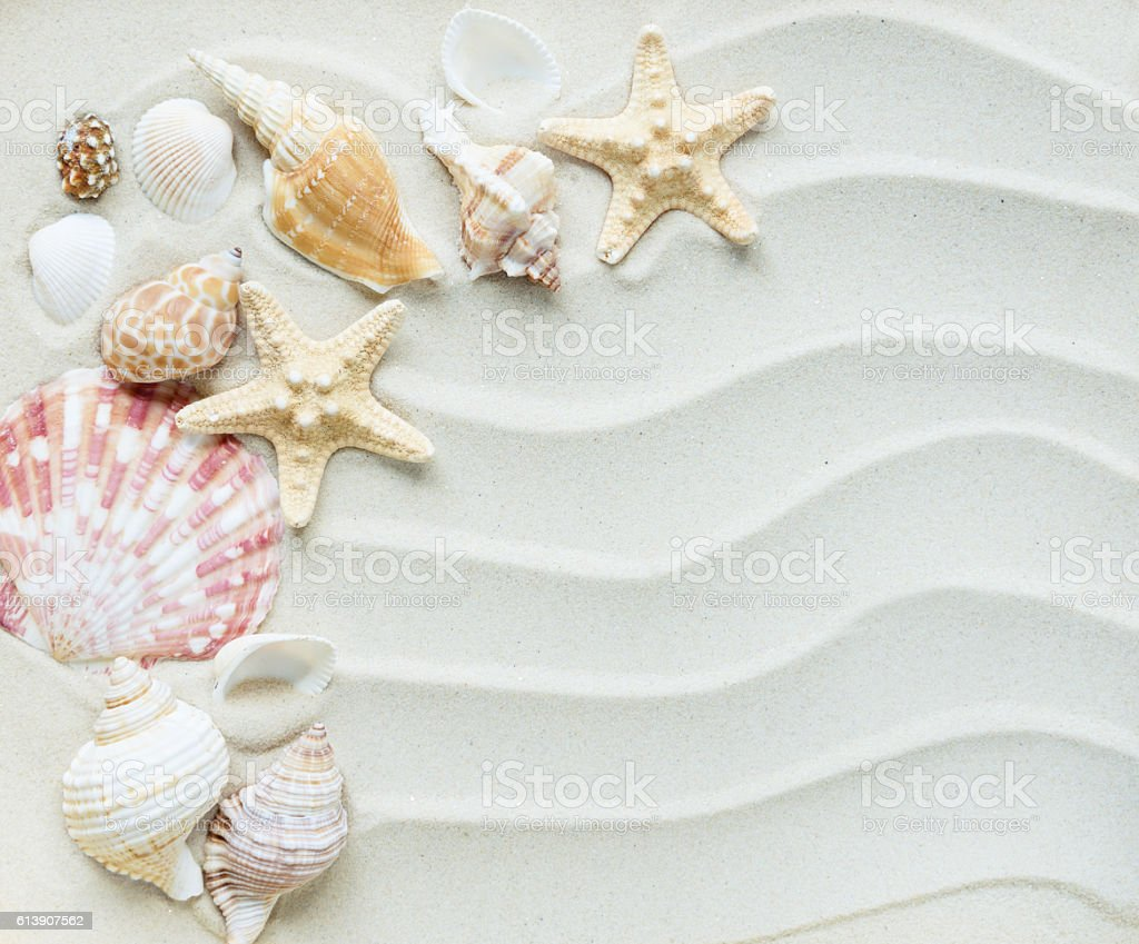 Clams and starfishes on thesea sand stock photo