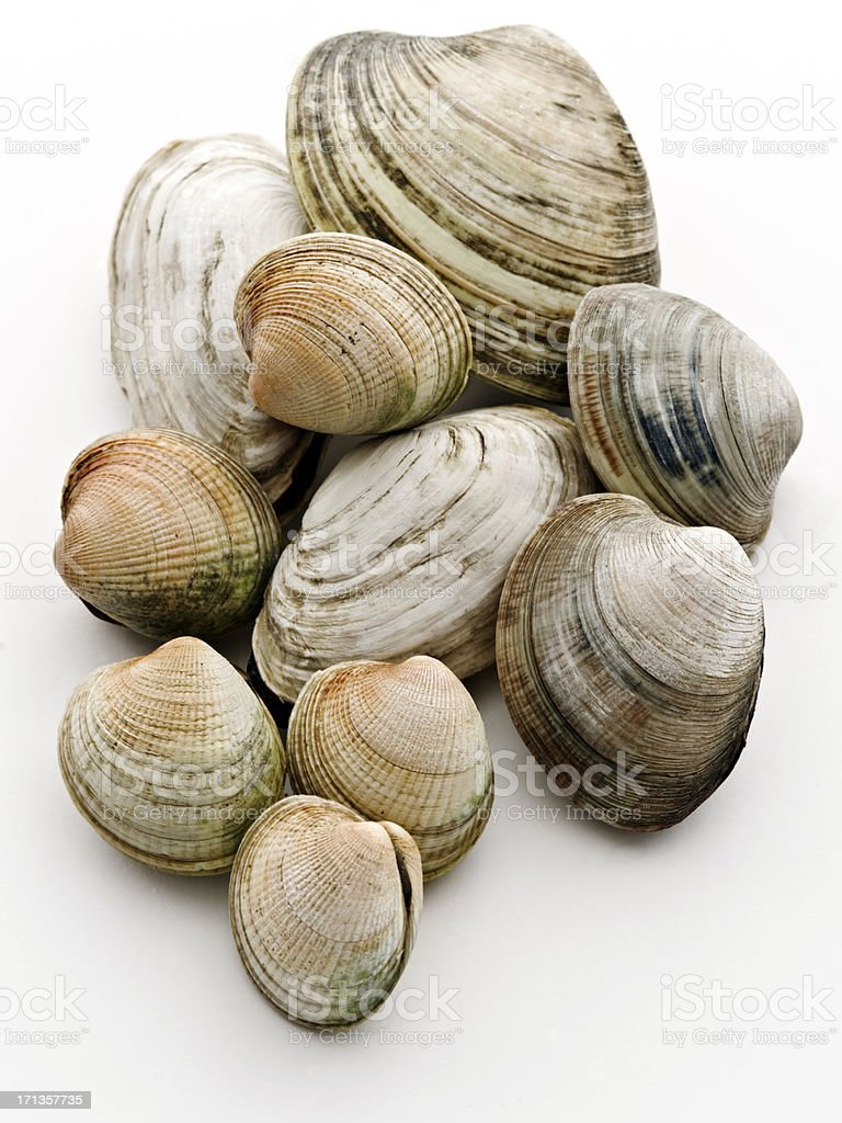 clams assortment stock photo