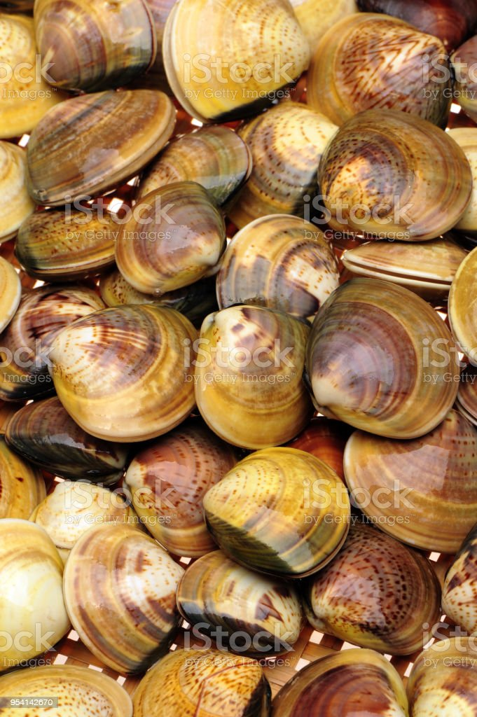 clams   background stock photo