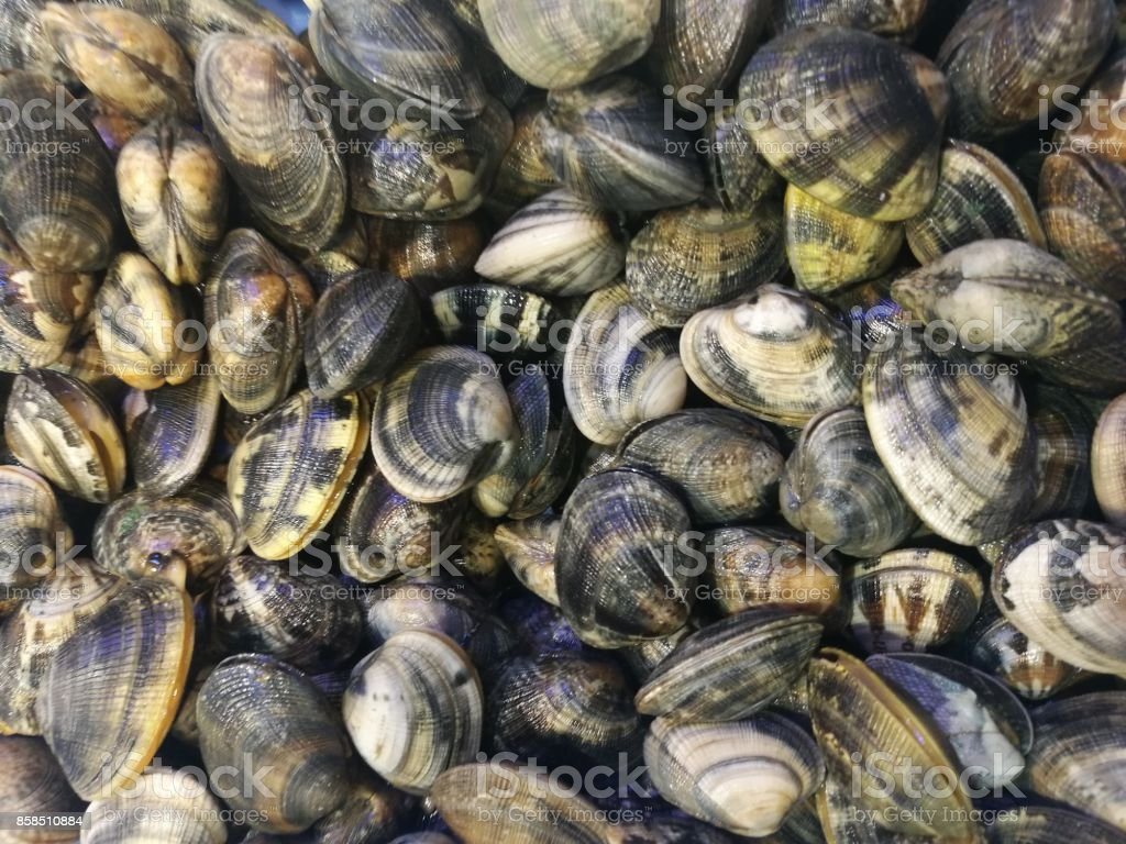 Clams in fish market stock photo