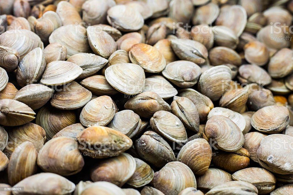 Clams in the Fish Counter of a Restaurant stock photo