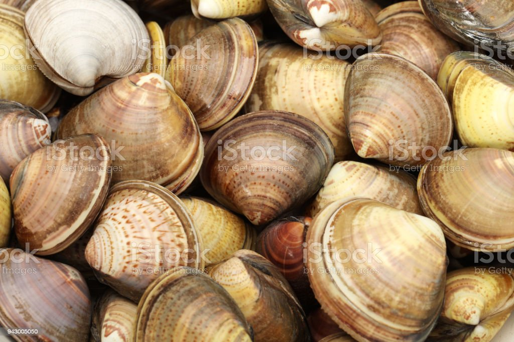 Clams isolated background stock photo