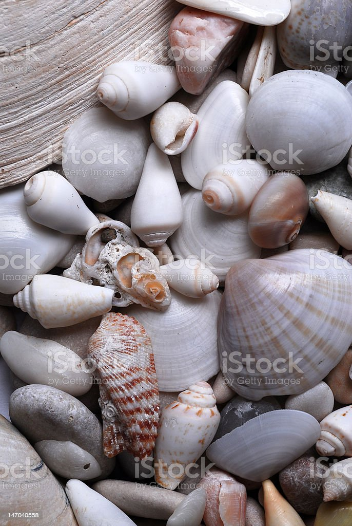 Clams, mussels stock photo