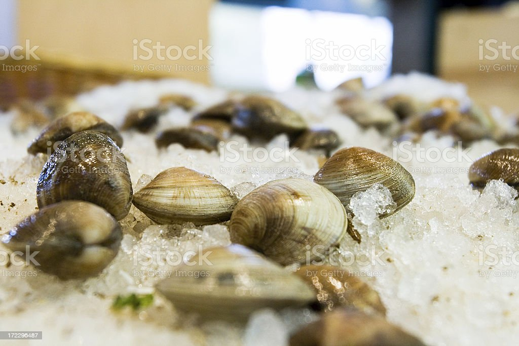 clams on ice royalty-free stock photo